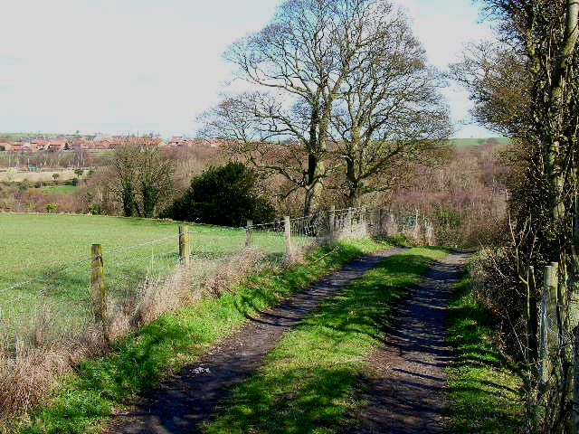 Farm road in the Deerness Valley