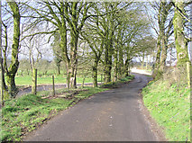 H5572 : The road at  Aghalane, Co. Tyrone by Kenneth  Allen