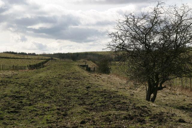 Coldwell, Kirkwhelpington