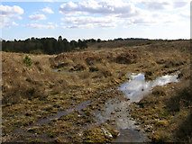 SU2115 : Heathland mire west of Islands Thorns Inclosure, New Forest by Jim Champion