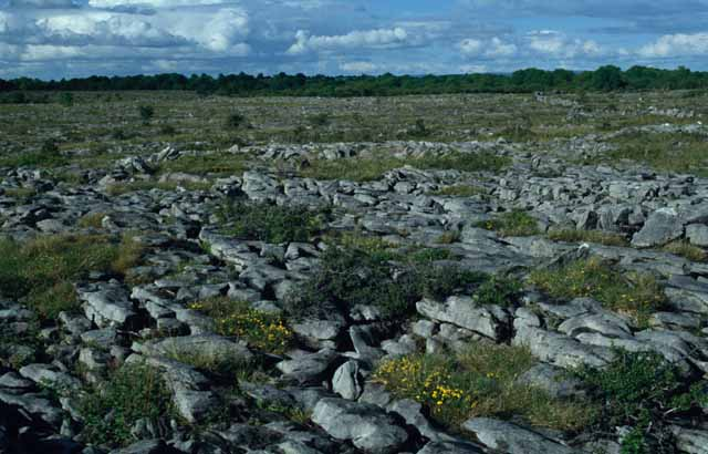 Limestone pavement at Pollduff