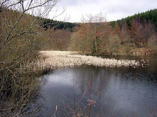 Pond in Glentress Forest