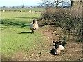 NZ3422 : Pasture, Lea Close by Mick Garratt