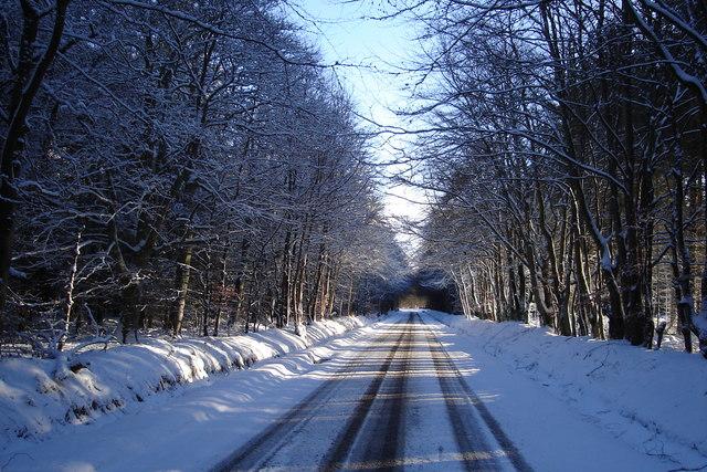 Winter Morning driving through the wood near Memus