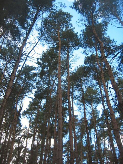 Pines of Moor Close