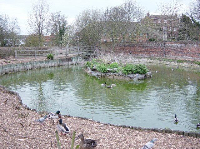 Duck Pond, Saffron Walden