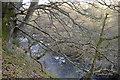 NO2950 : River Isla flowing through Den of Airlie near Ruthven by Sylvia Barrow