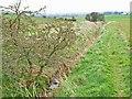 NZ2935 : Ditch near Hett Moor Farm by Oliver Dixon