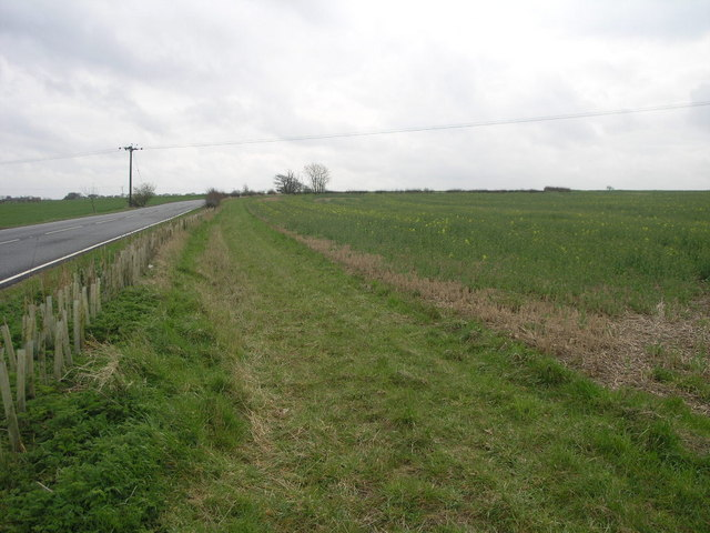 Road Follows Field