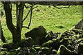 NN9424 : Mossy Stones below Fornought Farm by Alastair Muirhead