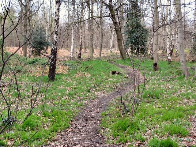 Footpath through Greno Wood