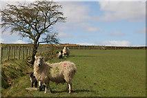 SD7657 : Footpath to Heath Farm by Alexander P Kapp