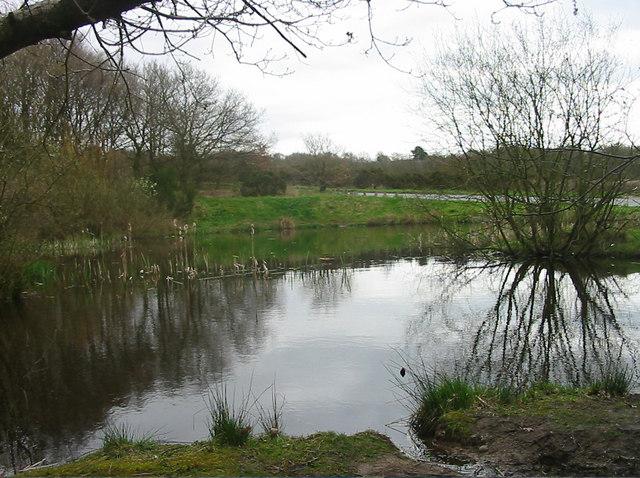 Pond at Barlaston Common