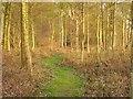 NT8139 : Dundock Wood by Richard Webb