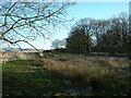NY6307 : Howes Plantation by David Medcalf