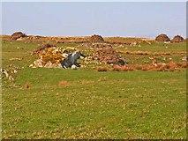 NX2454 : Field at Machermore, near Glenluce by Oliver Dixon