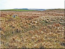 NX2954 : Challochglass Moor by Oliver Dixon