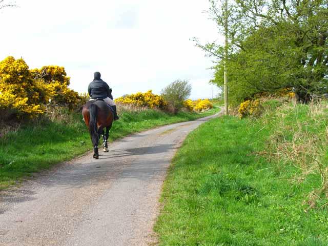 Horse and rider near Mahaar