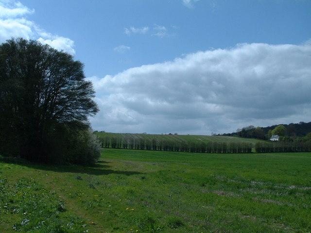 Noar hill near Selborne