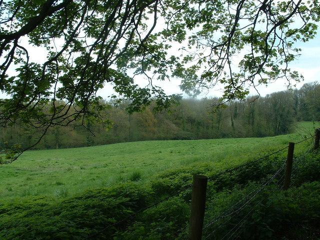 Temple Wood near Selborne