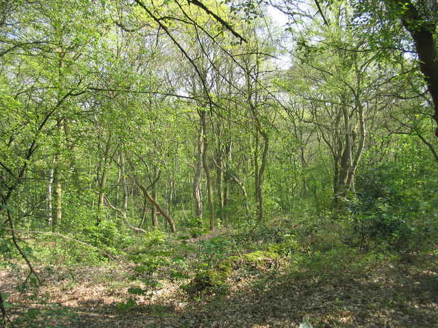 Scrub Hill Wood, Brentwood