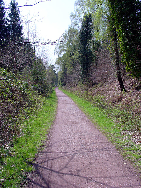 Cycle Path, Forest of Dean