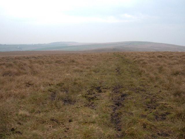 Heald Moor