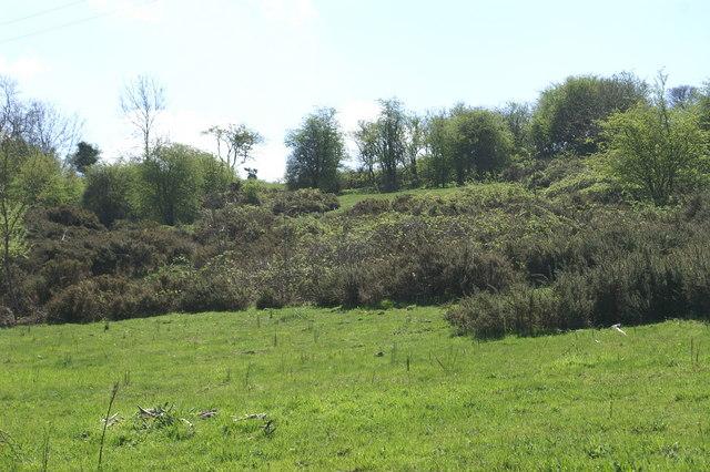 Gorse Field