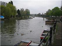 TQ1673 : River Thames: Eel Pie Island by Nigel Cox