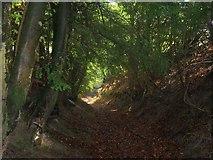 SU7328 : Path up to Warren Lane, Reston Hanger, Oakshott by Keith Rose