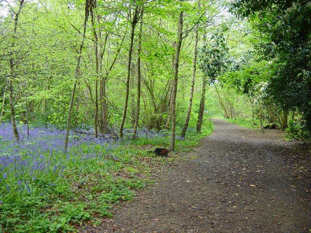Slindon Wood