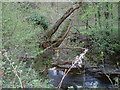 SJ0913 : Trout Pools on the Vyrnwy by John Phillips