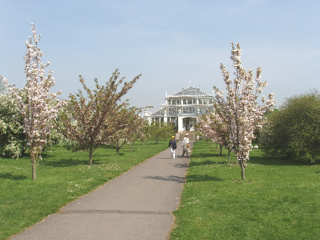 Cherry trees in blossom by the Temperate House, Kew Gardens