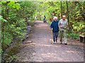 NZ4025 : Wynyard Woodland Park by Oliver Dixon