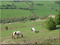 SK2767 : Near Beely. by Mike Fowkes