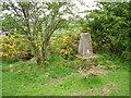 NS4668 : Broom Hill by Richard Webb