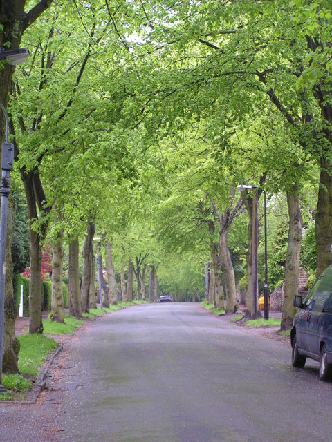 A treelined suburban street on Arbor Day.