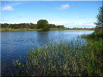 NT4681 : Marl Loch, Aberlady Bay by Lisa Jarvis