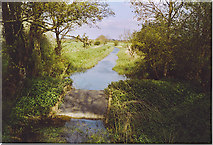 TQ0524 : Wey and Arun Canal near Harsfold Bridge. by Colin Smith