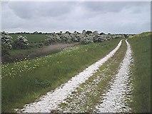 TQ9293 : Hawthorns by the borrow dyke by John Myers