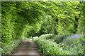 ST1815 : Churchstanton: Downlands Lane by Martin Bodman