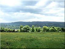 TQ1450 : Ranmore Common in Spring by Martyn Davies