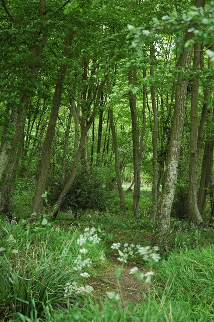 Woodland path with glade lit up.