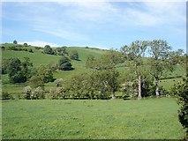 SH9271 : Fields at Cynant by Dot Potter