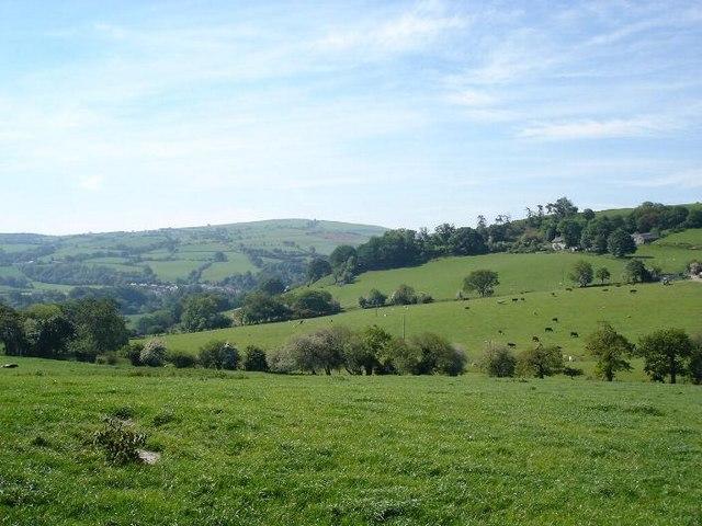 Cynant hills