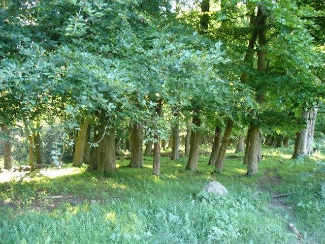 Woods at Bryngwyn