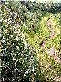 SM7709 : Pembrokeshire coastal path by Bob Jones