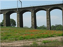 NU2212 : Alnmouth Viaduct by Christine Westerback
