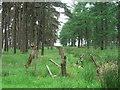 SE8194 : Woods at Brown Howe. by Steve Partridge