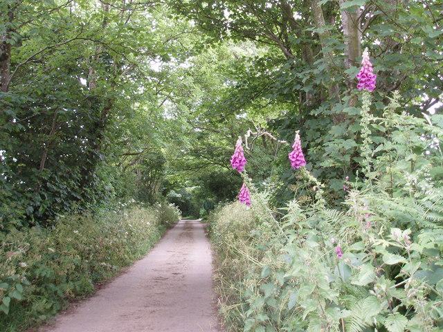 Lane to Gew Farm